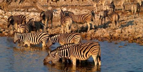 Sansibar & Serengeti (südwärts)