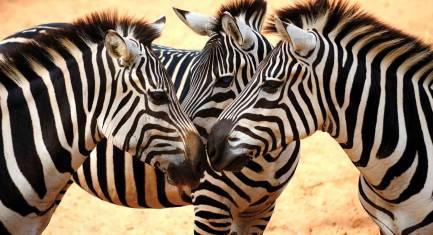 Ostafrikas Naturparadiese
