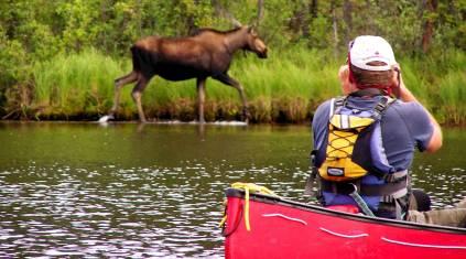 Kanutour auf dem Beaver & Stewart River