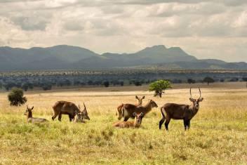 Ugandas unbekannte Schätze