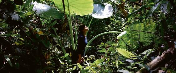 Westmalaysia intensiv: Kultur, Natur & Inselparadies