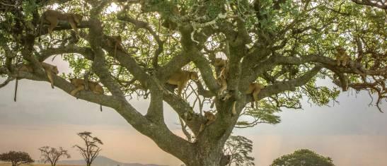 Masai & Tansania Camping-Safari