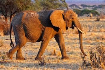 Ultimate African Adventure I