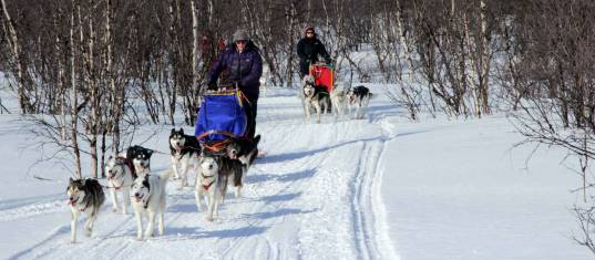 Hundeschlitten-Expedition