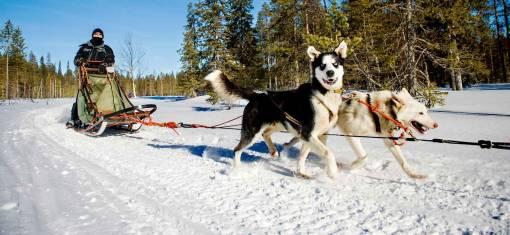 Husky-Abenteuer - Entdecke die Wildnis