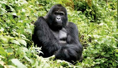 Uganda & Gorilla Overland