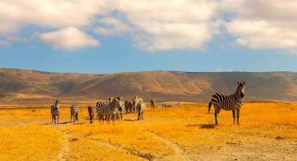 Nationalpark Safari Nord Tansania II