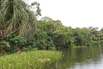 Madidi Nationalpark & Las Pampas