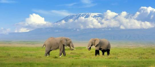 Kilimandscharo und Safari Abenteuer