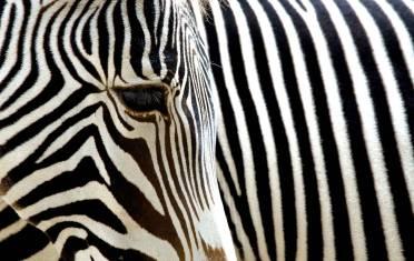 Safariabenteuer Kenia