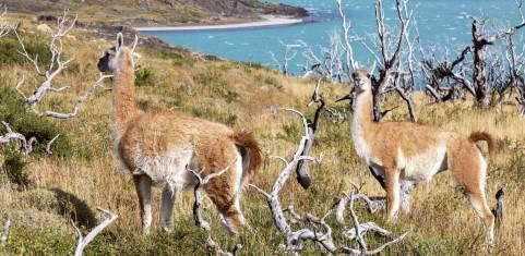 Quer durch die Anden & Seen von Chile nach Argentinien