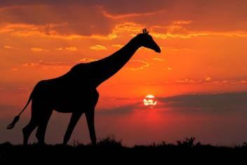 Abenteuerreise durch Afrika - Von Ostafrika nach Südafrika