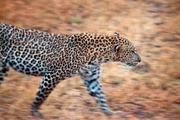 Campingsafari Kenia Nationalparks