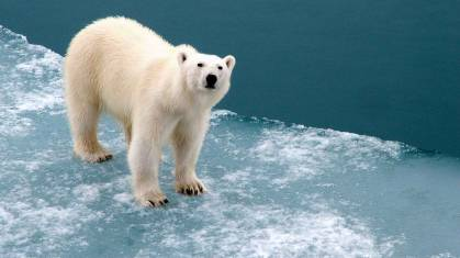 Arktis Expedition - Zu den Polarbären