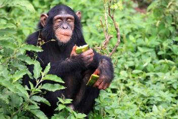 Gorilla & Wildlife Explorer