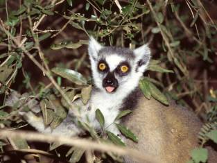 Wandererlebnis Madagaskar