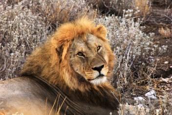 Abenteuer Safari im Krüger Nationalpark