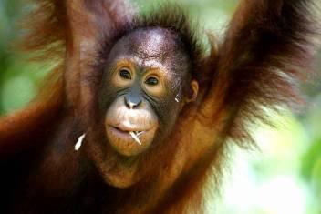 Erlebnisreise Borneo - Abenteuer Sabah
