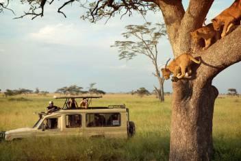 Tansania Safari Rundreise