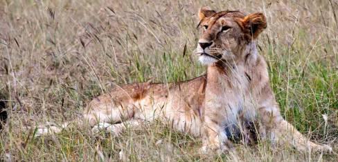 Safari Tansania & Sansibar