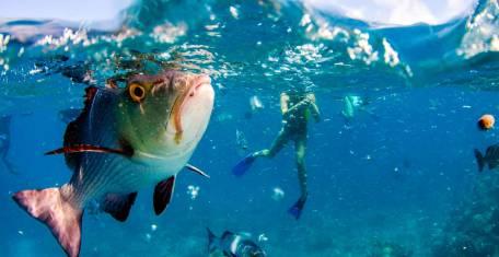Tagesausflug zum Great Barrier Reef