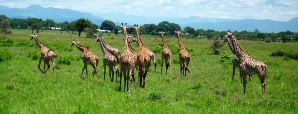 Südtansanias Tierparadiese