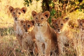 Naturerlebnis Serengeti