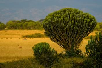 Landschaft im Queen Elizabeth Nationalpark