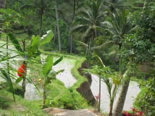 Bali Abenteuerreise & tropische Gili Inseln