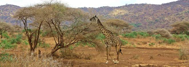 Overland von Nairobi zu den Victoria Falls