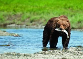 Abenteuerreise Alaska