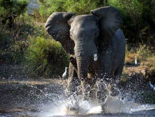 Great Limpopo Transfrontier Park & Strand Erlebnis