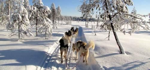Husky Abenteuer Finnland