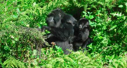 Gorillas & Wildparks