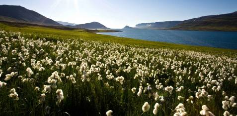 Island-Umrundung inkl. Westfjorde