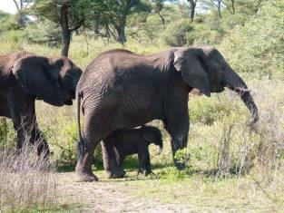 Naturwunder Serengeti, Ngorongoro & Tarangire