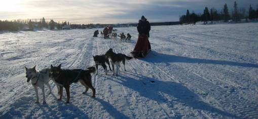 Hundeschlittentour in Schwedens Traumkulisse