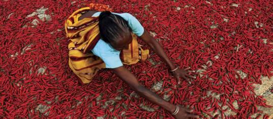 Indien kulinarisch entdecken