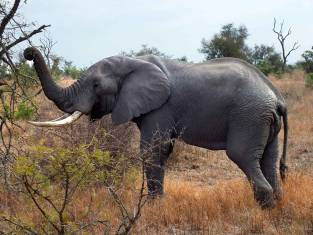 Okavango Delta, Vic Falls & Krüger