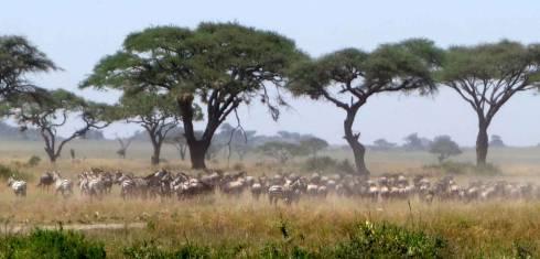 Highlights of Tansania