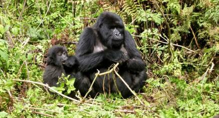 Abenteuer Uganda