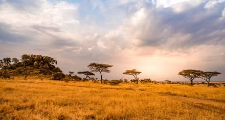 Landschaft in der Serengeti