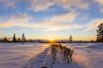 Husky Hundeschlittentour bei Sonnenuntergang