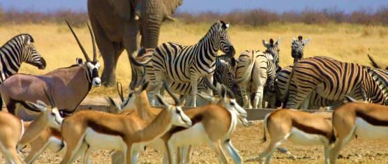 Namibia Abenteuer Familiensafari