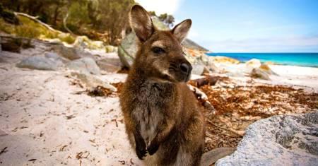 Kangaroo Island Wildlife Adventure