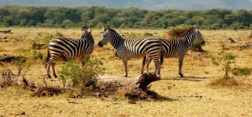 Camping Safari Tansania - Tarangire, Manyara & Ngorongoro