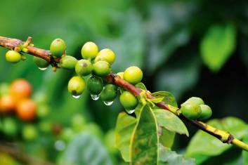 Kolumbiens Kaffeezone & Pazifikstrände