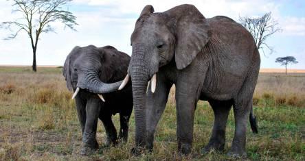 Erlebnis Serengeti, Ngorongoro & Lake Natron