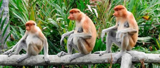 Malaysia - Höhepunkte Borneo