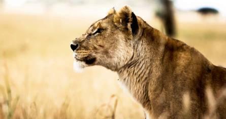 Erlebnis Serengeti & Ngorongoro